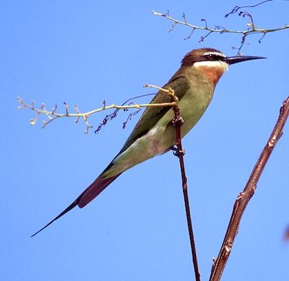 Gallery - bird image