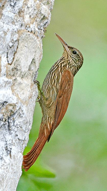 Bird Order photo