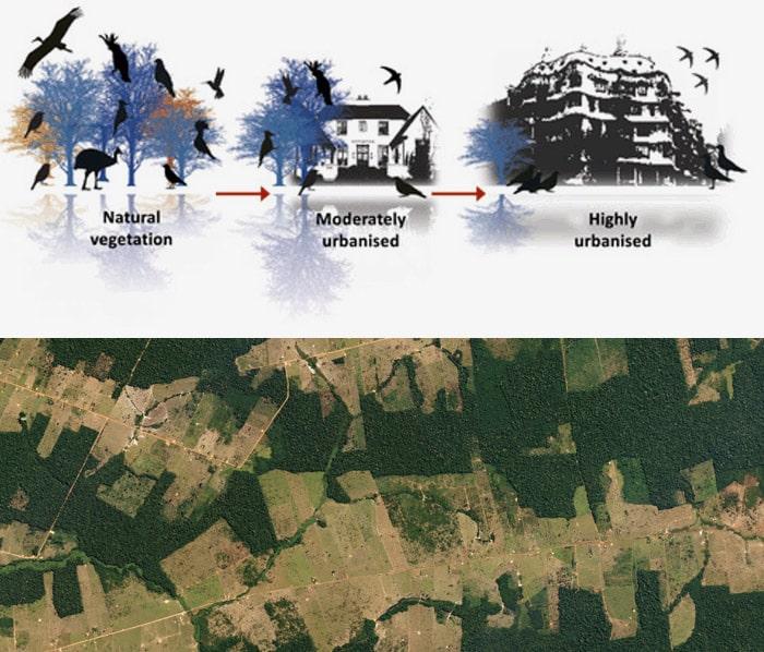 Ecosystems image